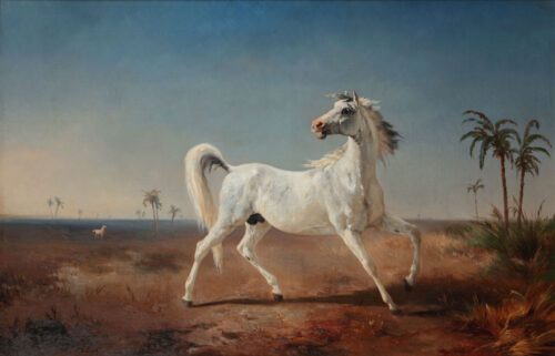 Johannes Hubertus Leonardus de Haas - Arabian stallion
