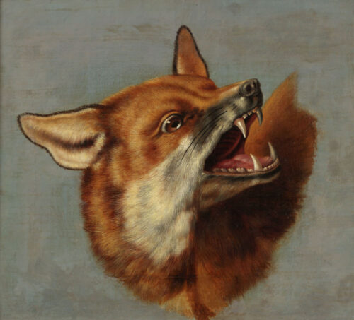 Attributed to Johann Dietrich Findorff - Head of a fox - a study