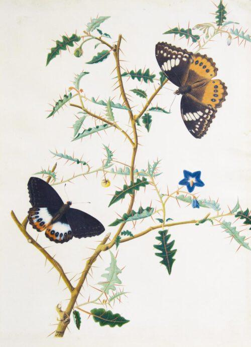 Bloesemende struik met vlinders - Hermanus de Wit