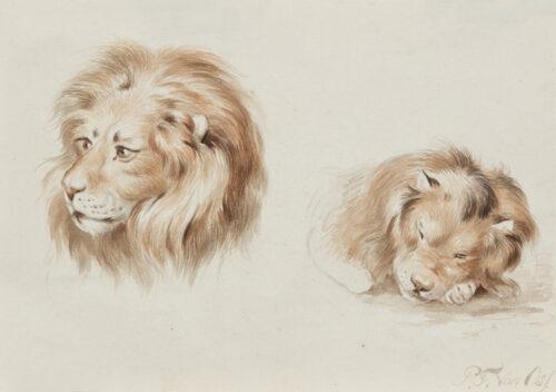 Pieter Frederik van Os - Lions - a study