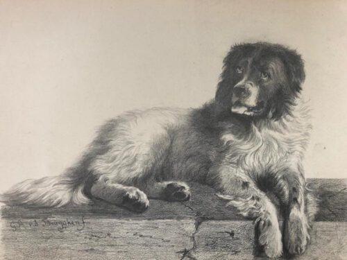Guillaume Anne van der Brugghen-A dog