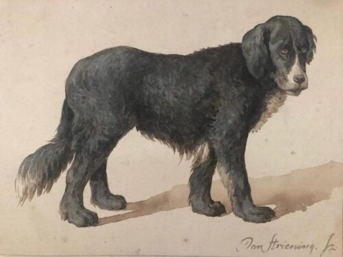 Jan Striening-A dog