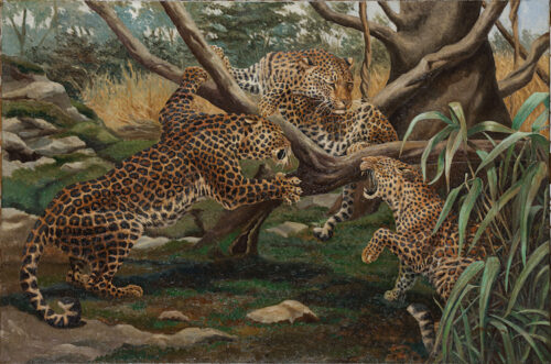 Maurits Staring - Young Leopards playing